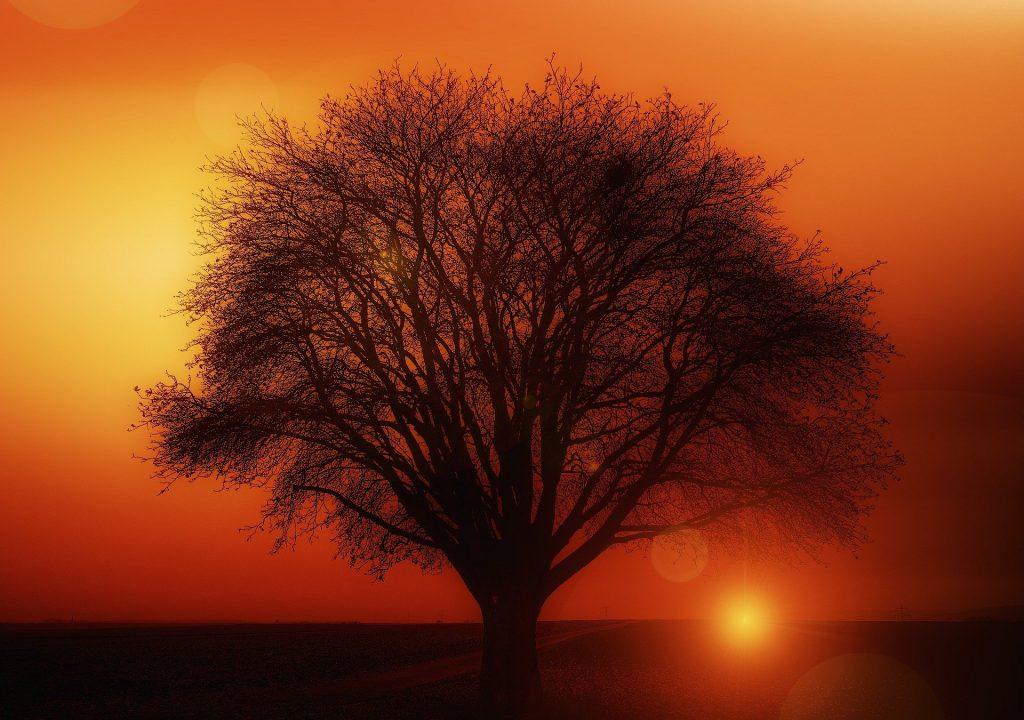 tree 117582 1920